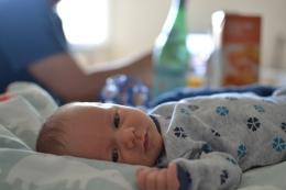 4 uger gammel