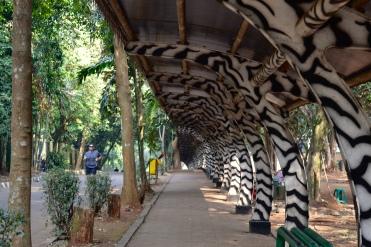 Zebra skygge
