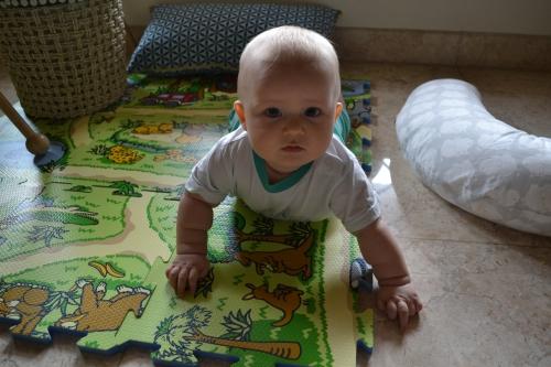 6 måneder gammel