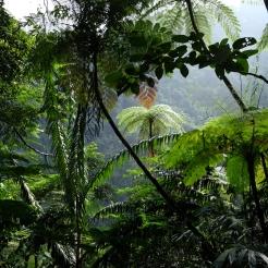 Tropisk skov