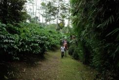 Ridetur i plantagen